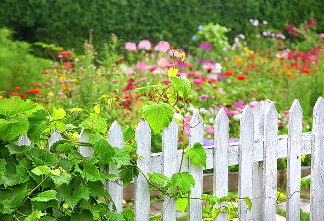 Gardenzaun