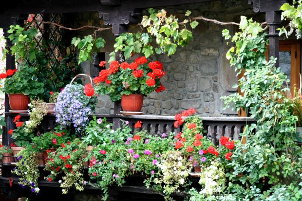 Pflanzen verwandeln den Balkon in ein buntes, gut duftendes Blumenmeer