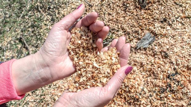 Holzkitt herstellen kann man auch mit größeren Spänen, um die Struktur von Weichholz zu imitieren