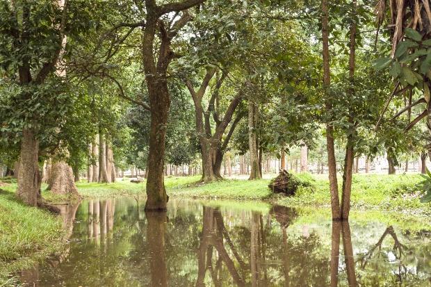 Teak Tropenwald - das Holz hat ein natürliches Holzschutzmittel gegen Fäulnis