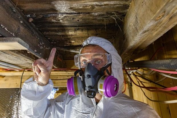 Mann in Schutzkleidung untersucht verschimmelte Holzstruktur