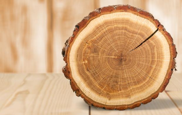 Baumscheibe - ideal um Altholz-Recycling zu betreiben