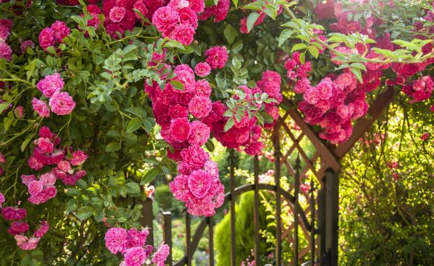 Prachtvolle Blumen machen aus jedem Gartentor einen Hingucker